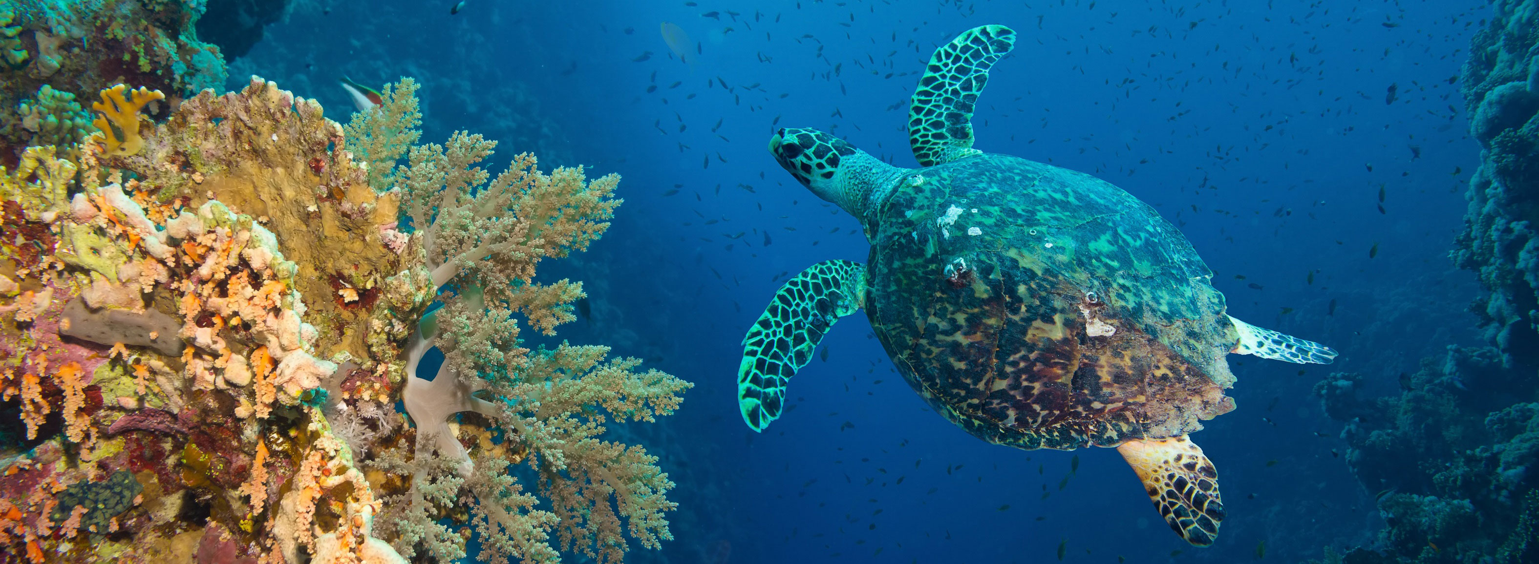 Fun and Interesting Great Barrier Reef Facts for Kids & Adults