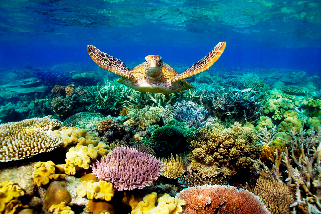 best cairns great barrier reef dive snorkel sites
